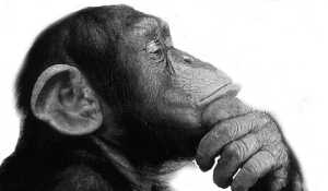 Thinking Monkey - Scruffymonkey Web Design Bolton